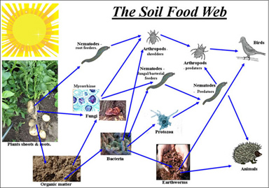 soil food web